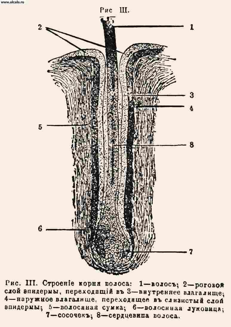 Сперма внутри влагалище 12 фотография