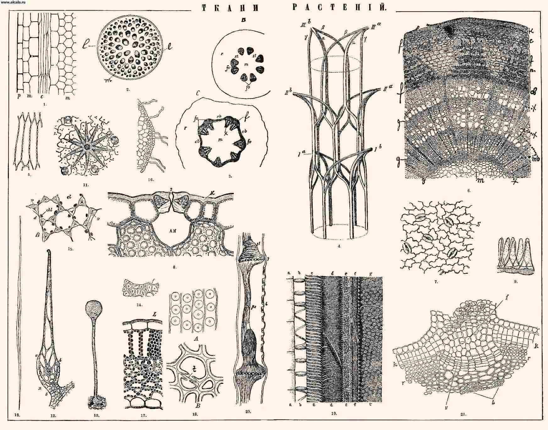 Животные ткани рисунок 3