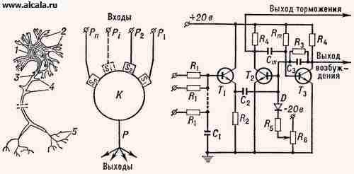 ...и электрическая схема искусственного нейрона (справа): 1 - тело...