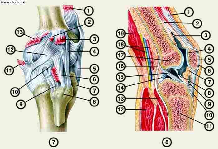 Боли в мышцах коленного сустава
